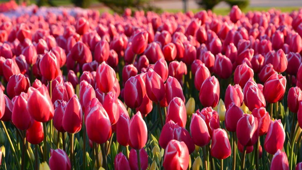 Morton Arboretum, spring, beautiful